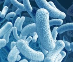 Amsterdam - wir sind nicht allein: milliarden mikroben leben auf